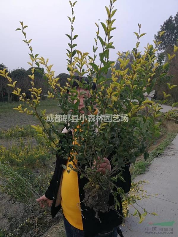 成都郫县小森林园艺场