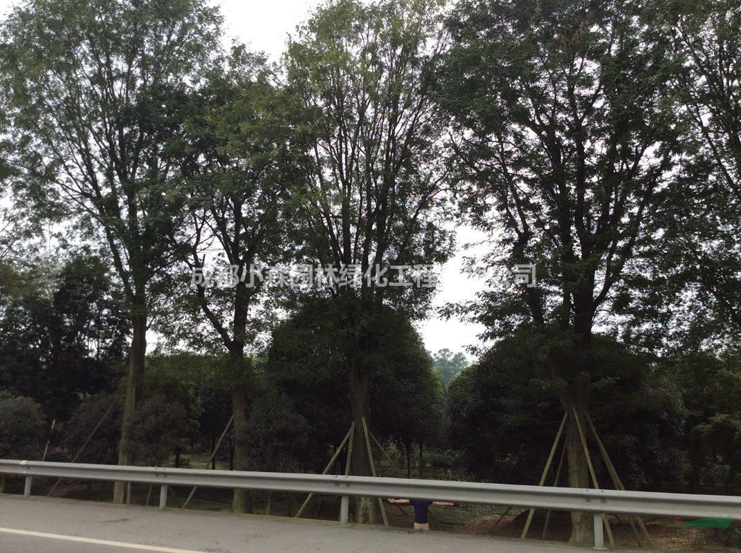 成都小森园林绿化工程有限公司
