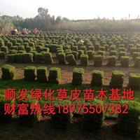 马尼拉草皮出售至贵州省,顺发绿化发往贵州省马尼拉草皮直供基地