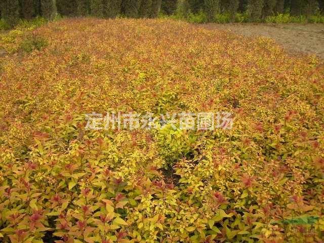 壁纸 成片种植 风景 花 植物 种植基地 桌面 640_480