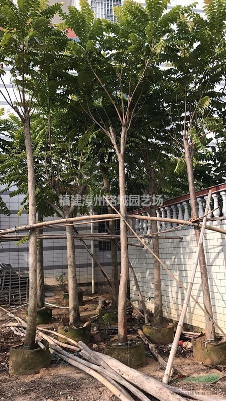 福建漳州铭城园艺场