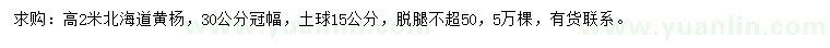 求购高2米北海道黄杨