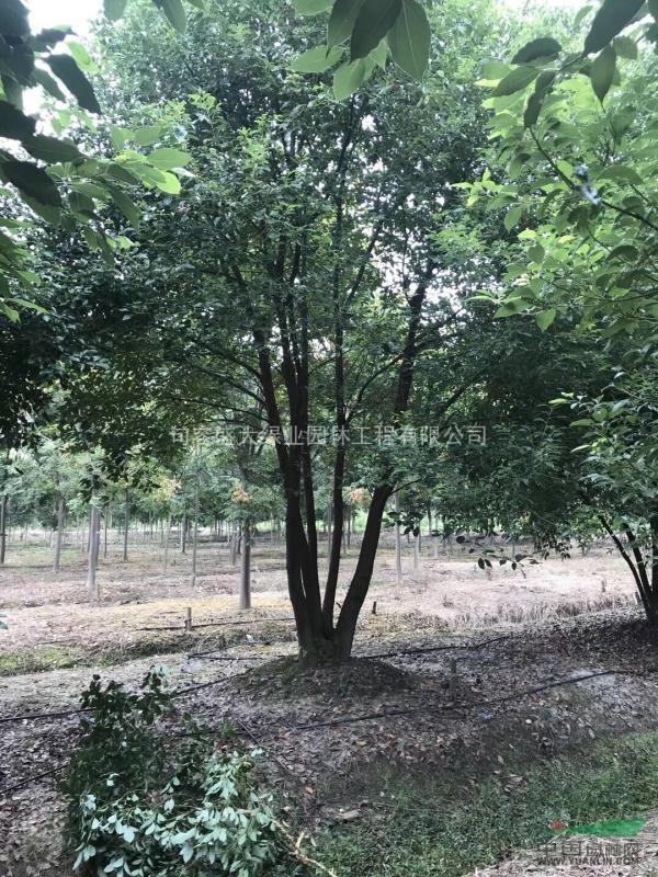 句容盛大绿业园林工程有限公司