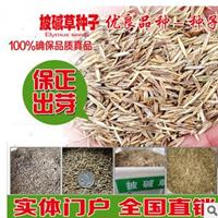 江苏省草坪种子批发,品种,高羊茅,早熟禾,四季青