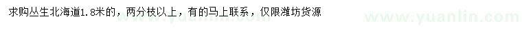 葡京1.8米丛生北海道黄杨