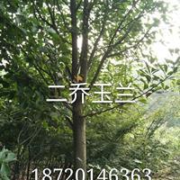江西[產品]/江西二喬玉蘭價格/報價