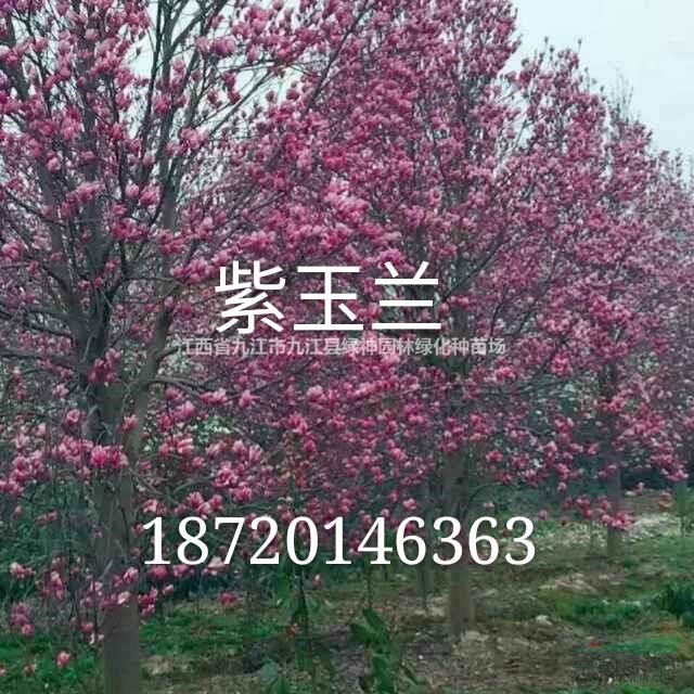 江西省九江市九江县绿神园林绿化种苗场
