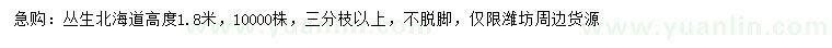 葡京高1.8米丛生北海道黄杨