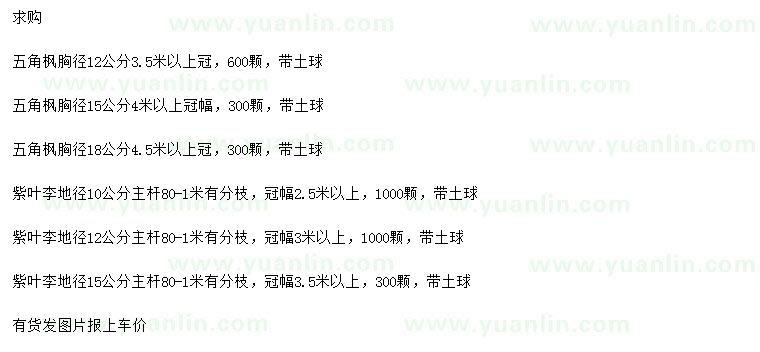 求购胸径12、15、18公分五角枫、地径10、12、15公分紫叶李