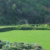 马尼拉草 台北草、菲律宾草、马尼拉芝、半细叶结缕草