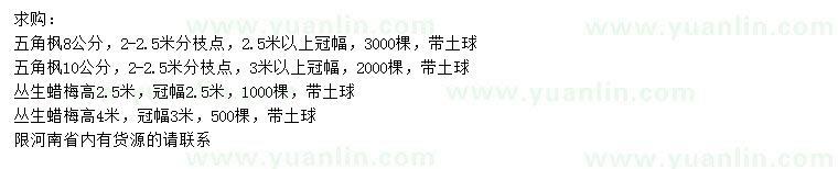 葡京8、10公分五角枫、高2.5、4米丛生蜡梅