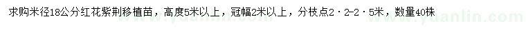 葡京米径18公分红花紫荆