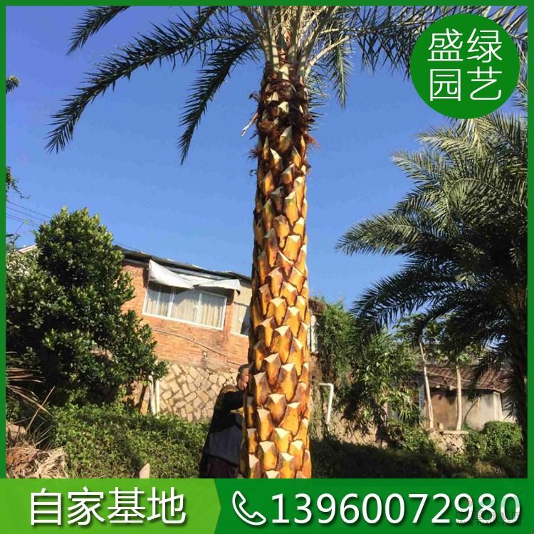 漳浦县马口盛绿园艺场