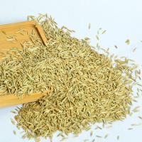 多年生黑麦草 一年生黑麦草种子价格 优质黑麦草种子批发