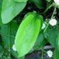 供应金鱼藻、泽泻、细叶莎草、三白草、水葫芦、水芹等