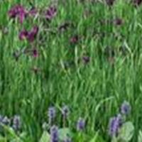 供應苦草、聚草、伊樂藻、狐尾藻等水生植物、沉水植物