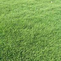 湖南郴州马尼拉草皮,草坪,*新报价3元