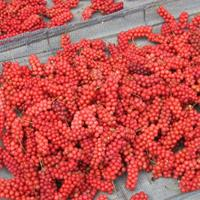 五味子分布,种子需要联系绿康态