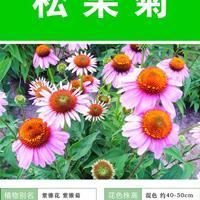 供應松果菊杯苗、松果菊種子.各類花卉種子苗木種子草籽