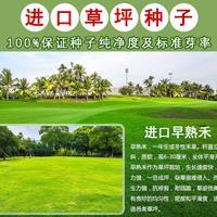 进口草坪早熟禾种子大量销售,专业绿化定制!