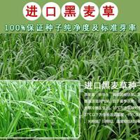纯进口多年生黑麦草种子现货600吨,大量销售!