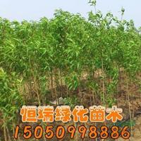 江苏[产品]/江苏桃树苗价格/报价