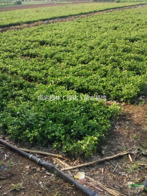 项宅园林(绿化)苗木基地