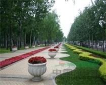 上海绿化养护、专业提供室内外绿化养护绿化服务、供应香樟树