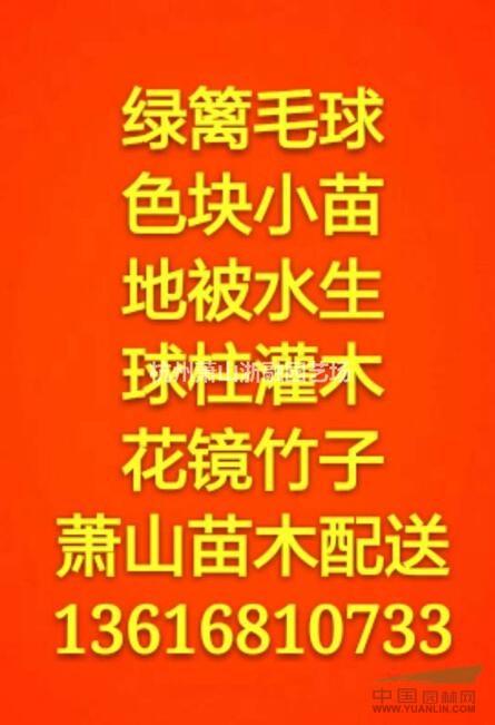 金边黄杨/龟甲冬青/红叶石楠/金森女贞/红花继木/洒金珊瑚等