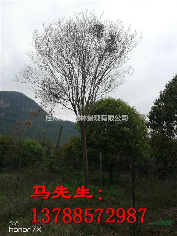 桂林畅鸿园林景观有限公司