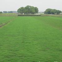 南宁供应大量马尼拉草皮,价格优惠