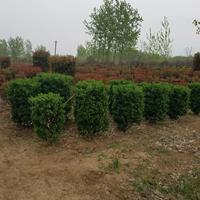 红叶石楠柱、红叶石楠、红王子锦带、花柏球、沙地柏