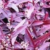 荷花、睡莲、红莲子草、芡实、蜘蛛兰、香菇草、金钱水葱