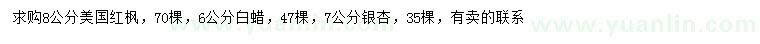 葡京美国红枫、白蜡、银杏