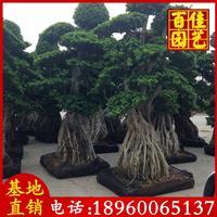 榕樹樁頭價格