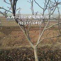 核桃树10公分价钱·核桃树10公分多少钱·供应山西运城核桃树