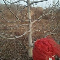 8公分核桃树赔偿价格·10核桃树价格·占地核桃树价格赔偿标准