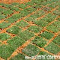 可供東莞市政園林綠化馬尼拉草皮與蘭引3號