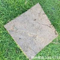 可供黃岡生態復綠工程馬尼拉真草皮家庭草坪*好種什么