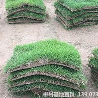 可供十堰城市綠地綠化馬尼拉真草皮批發價格