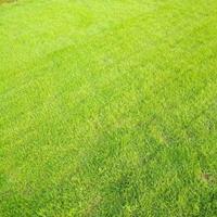 可供貴州生態復綠工程馬尼拉草皮雜草防除