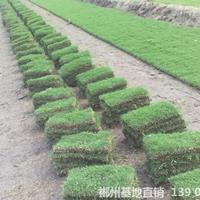 可供東興邊坡生態治理綠化馬尼拉草坪多少錢