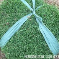 可供湘潭保持水土綠化馬尼拉真草皮種類有幾種