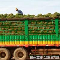 可供貴州庭院別墅綠化馬尼拉真草皮人工種植草皮多少錢一平方