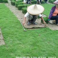 可供廣州人工湖防護綠化馬尼拉真草皮采購價格