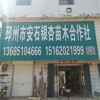 江苏邳州银杏 红枫 法桐 国槐 合欢 低价出售