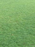 马蹄筋草坪供应,四川哪里有草坪出售,马蹄筋草坪供应基地