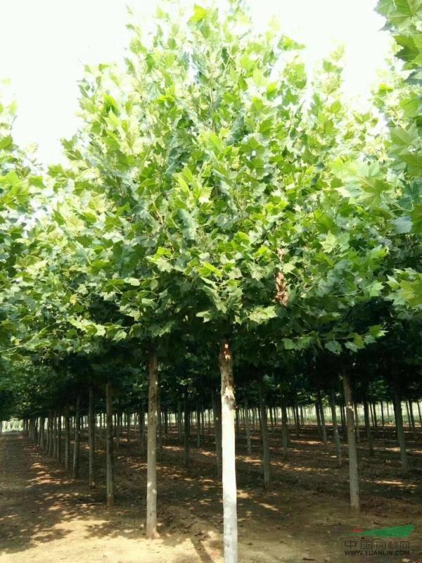 济宁市兖州区廷涛苗木种植专业合作社