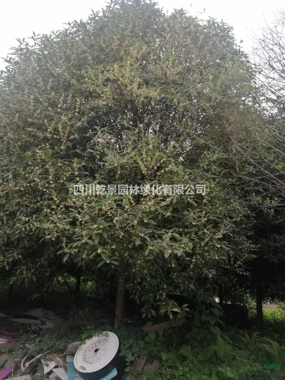 四川乾景园林绿化有限公司