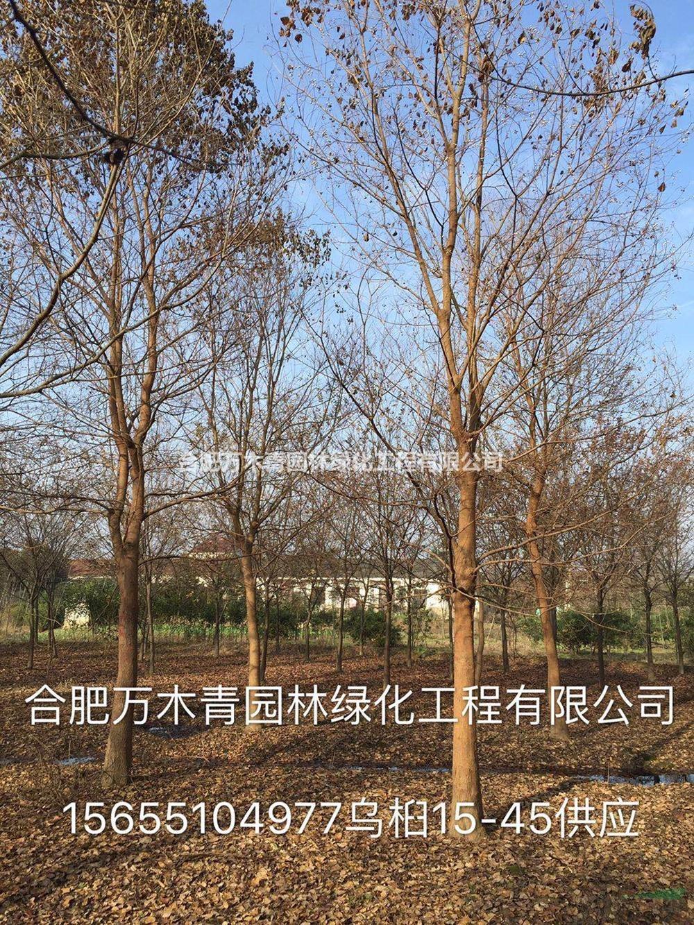 合肥万木青园林绿化工程有限公司